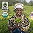 HONEST Tea® Honey Green Tea, 16.9 oz., 12/CS Thumbnail 6
